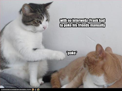 funny-pictures-cat-pokes-other-cat