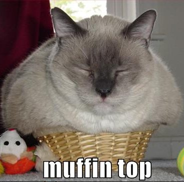 cat_muffin_top