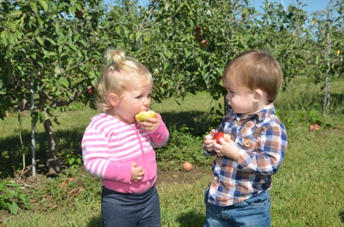 So intrigued by AR's apple-eating abilities!